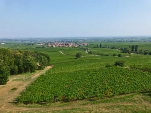 Blick von der Villa Ludwigshöhe in die Rheinebene und auf die Pfälzer Weinfelder