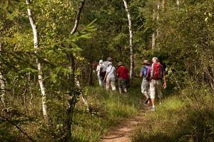 Wanderung durch das Heidemoor